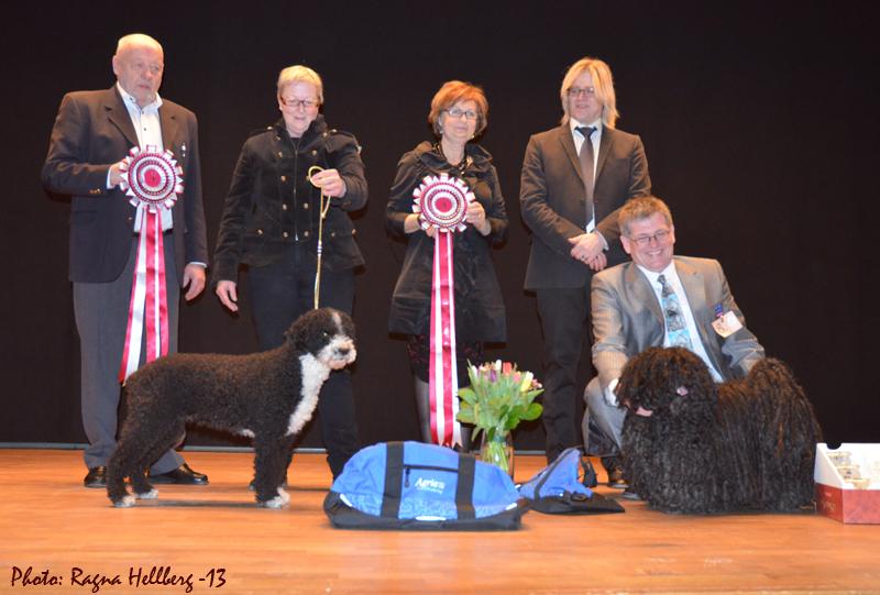 Hallandshunden 2013