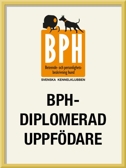 BPH -diplomerad uppfödare