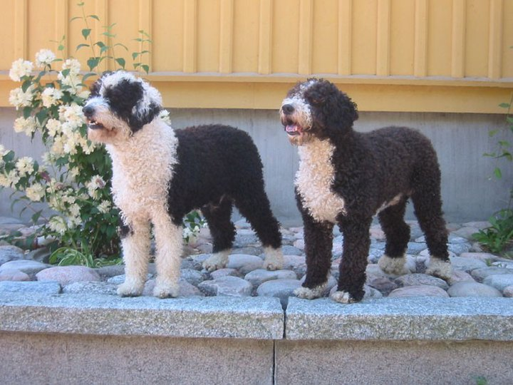 Fozzie och Winnie