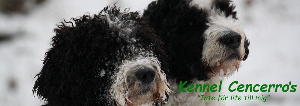 Kennel Cencerro's